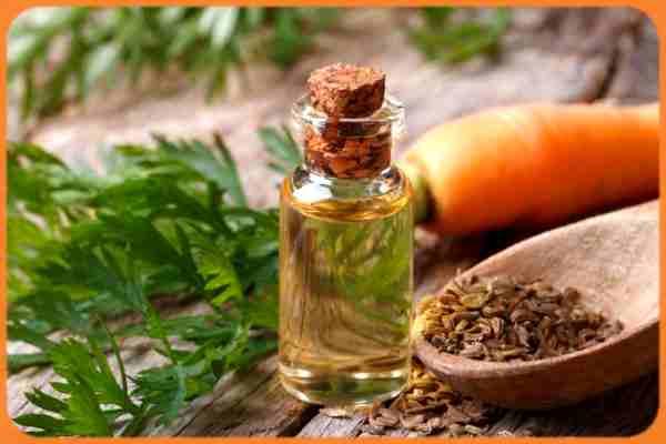 Huile de carotte bio: Liste des bienfaits de l'huile de carotte pour la peau