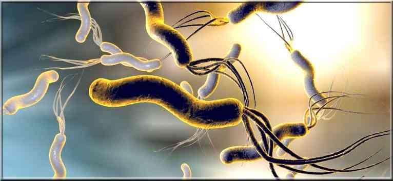Schémas d'éradication et traitement de bactéries Helicobacter pylori ( H. pylori )
