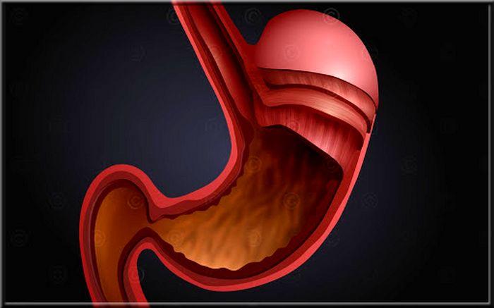 Types d'enzymes digestives, mécanisme et fonctionnement