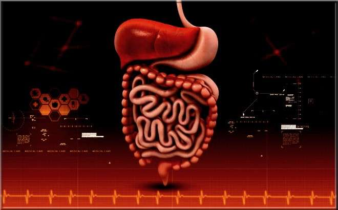 Quelle sont les types de sucs digestifs? Rôle et fonctionnement